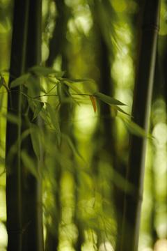 Wear Bamboo