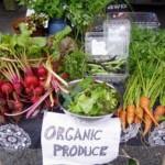 5 Reasons to Start an Organic Garden