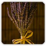 lavender-spritz-landing