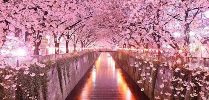 cherry blossom spa bliss