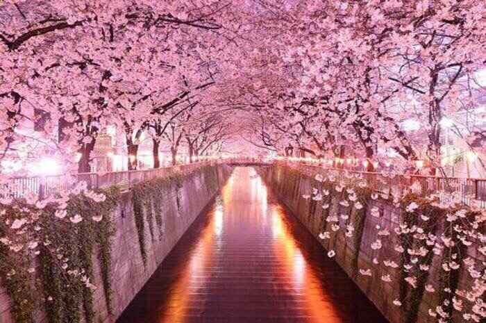 cherry blossom spa bliss an epic springtime spa ritual, Natural flower