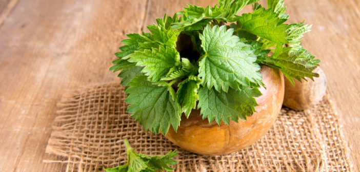 40089910 - fresh raw nettle leaves over rustic wooden table