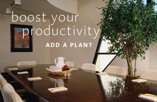 plant-520x343-copy1-520x336