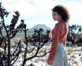 Picture Perfect Postcards From Cape Town