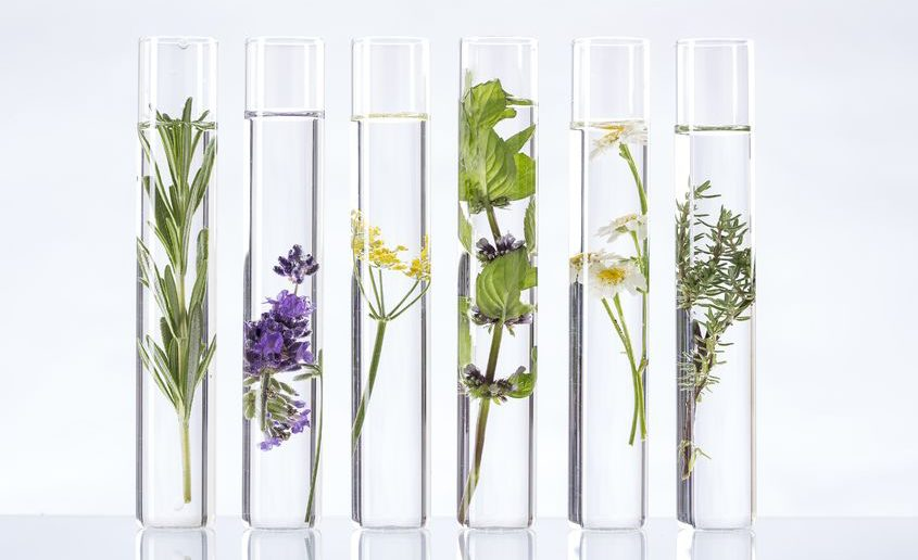 45659227 - scientific experiment - flowers and plants in test tubes